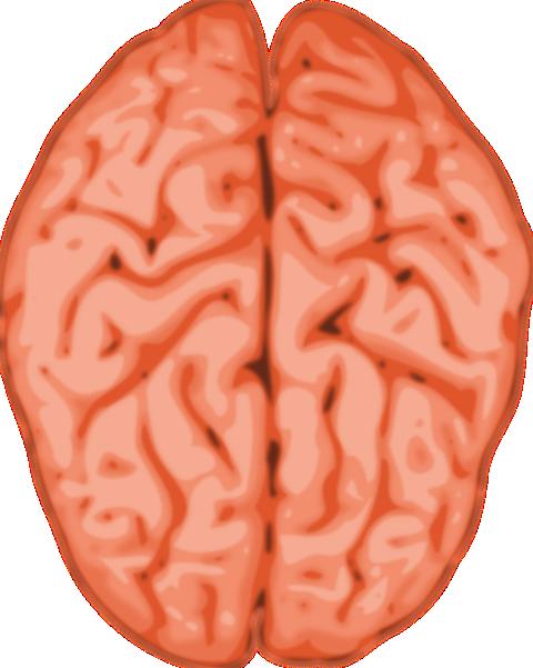 Moving clipart brain Use Human Domain Clip Brain