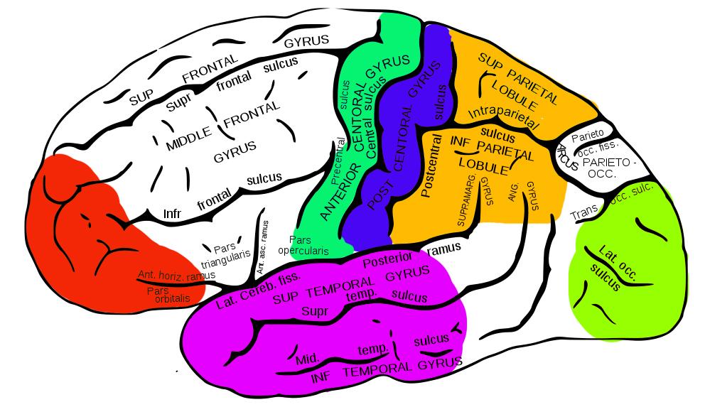 Brains clipart ability Photos Brain  Seen Before