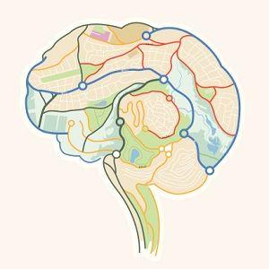 Brains clipart ability & on Neuroplasticity best Neuroplasticity