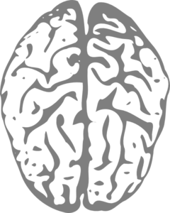 Brain clipart art png Clip art Grey online royalty