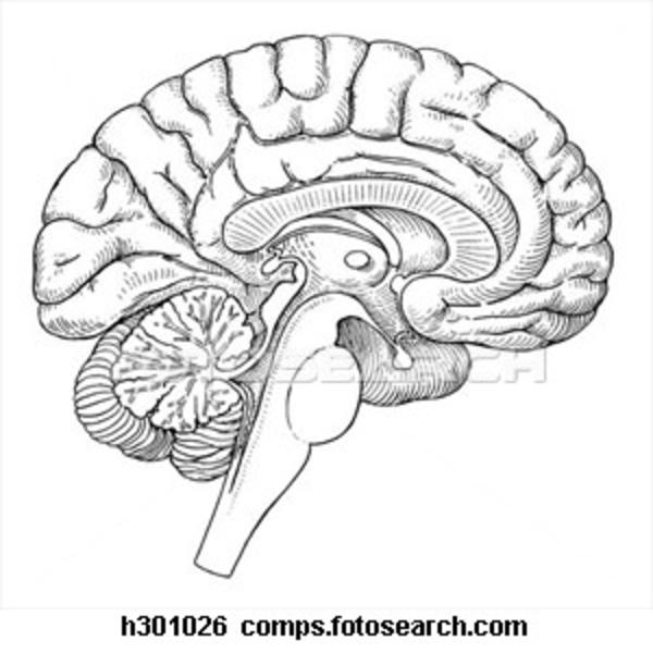 Drawn brain blank #12