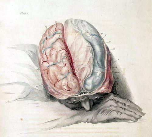 Drawn brains skull On 56 about best Beyond