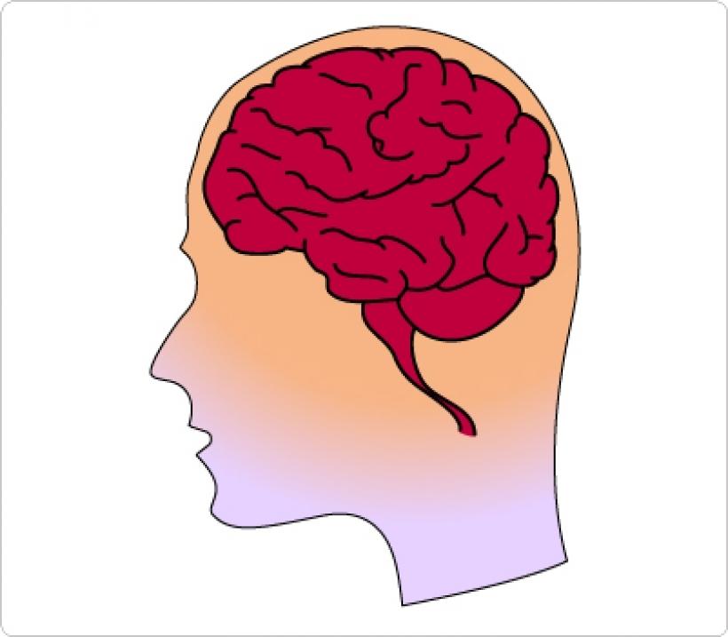 Brains clipart cartoon Human brain black brain black