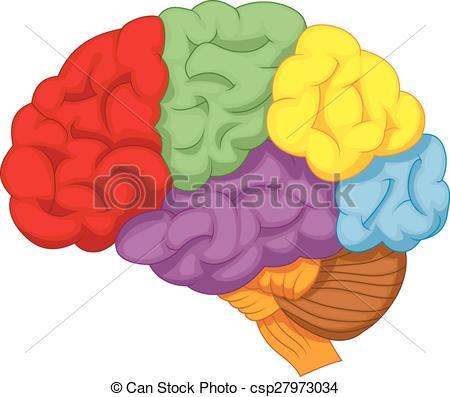 Brains clipart cartoon  brain colorful csp27973034 Cartoon