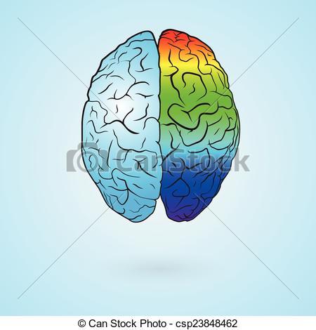 Brains clipart colorful Brain Clip Colored left brain