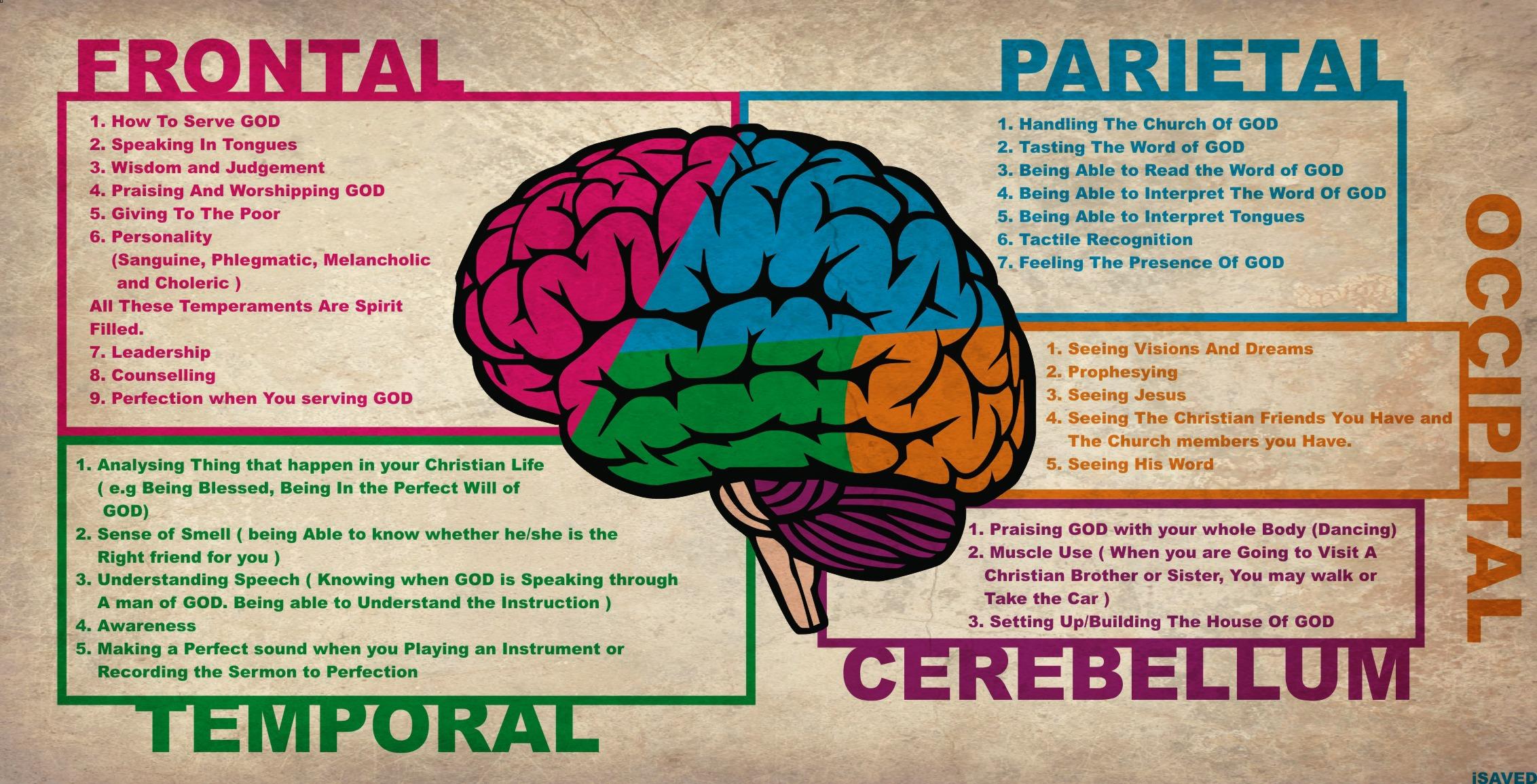 Brains clipart counsellor Art Diagram Brain Brain Clip