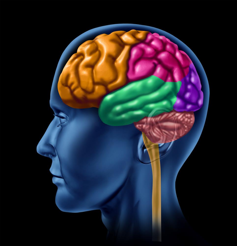Brains clipart head clipart In Clipart Brain Head Head
