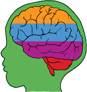 Brains clipart healthy mind Build a healthy How brain?