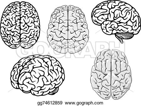 Brains clipart human brain Clipart Illustration Black human and