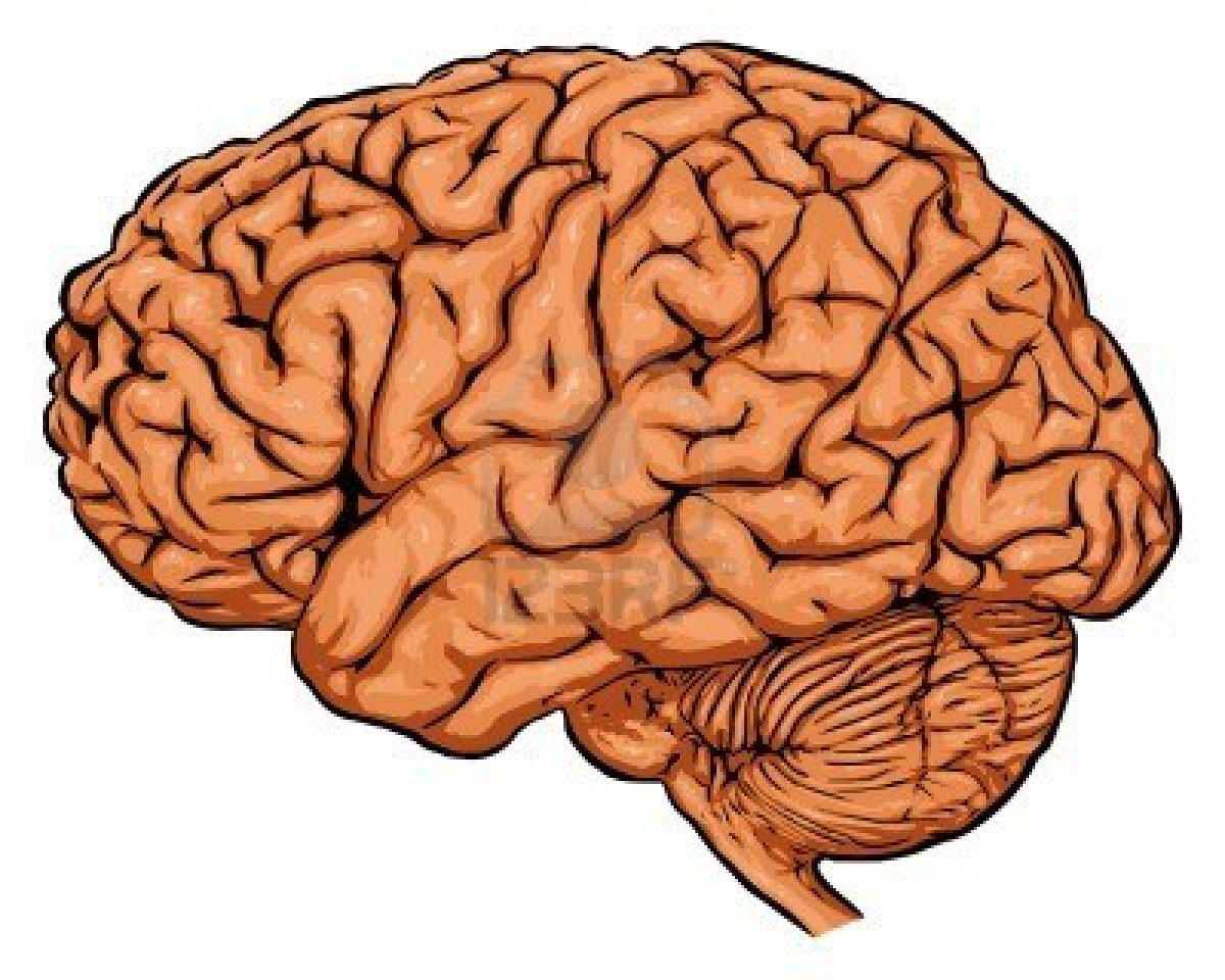 Brains clipart human brain Best images and on and
