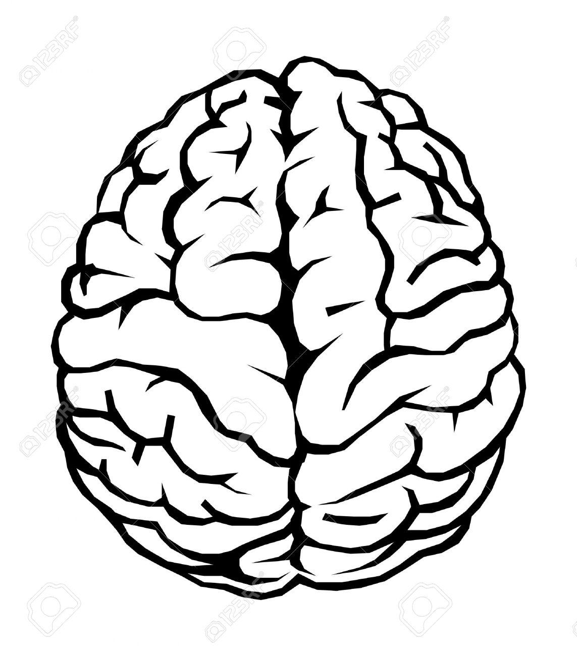 Brains clipart human brain #2