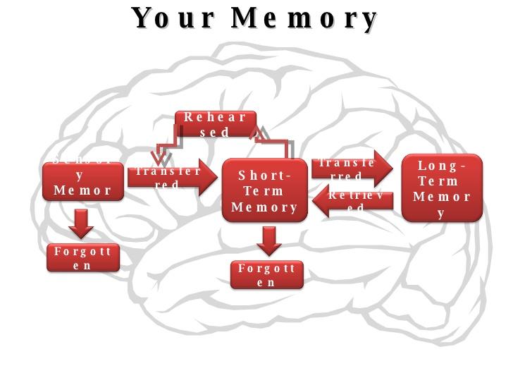 Brains clipart long term memory 2 Memory 0  Transferred