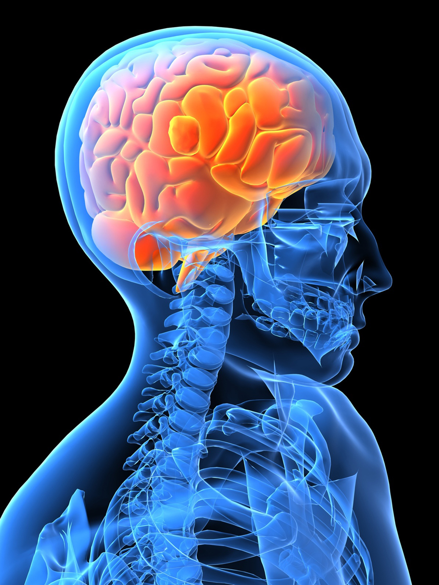 Brains clipart psychologist Work? Clip Human How Free