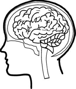 Brains clipart psychologist Book clipart Psychology brain Cliparts