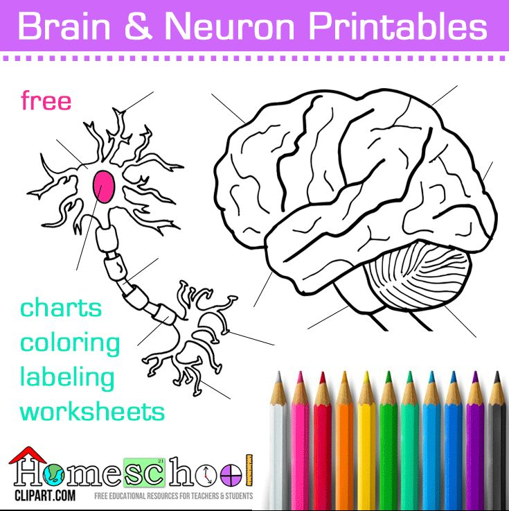 Brains clipart school counselling School Pinterest  on Pin