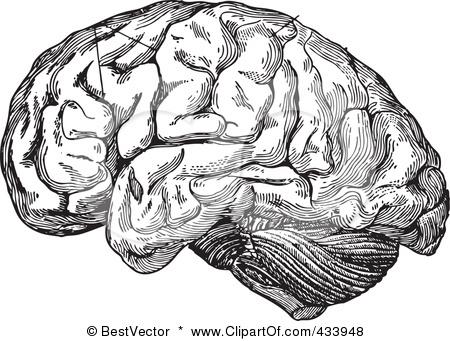 Drawn brains clip art Human White And Brain Clipart