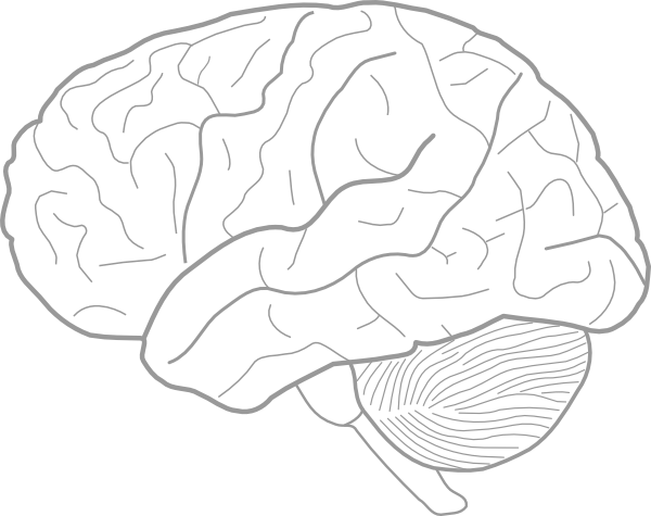 Drawn brains unlabeled lateral  as: Clip this clip