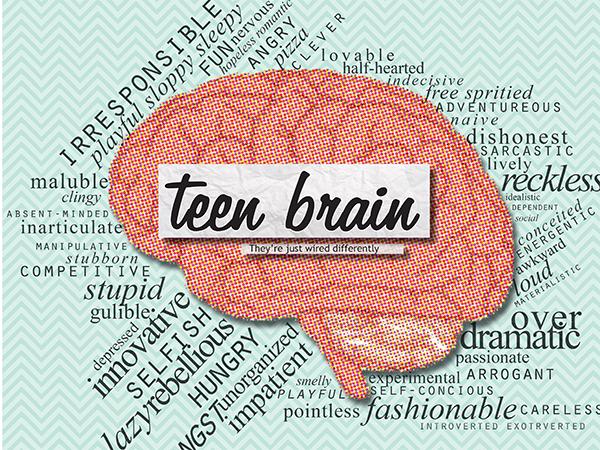 Brains clipart the adolescent Brain teenage