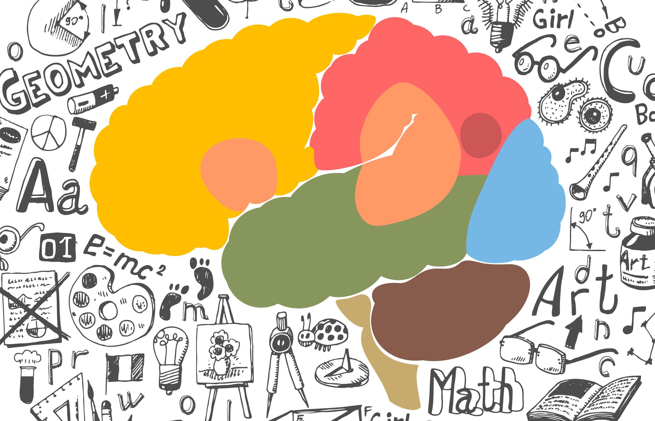 Brains clipart the adolescent Researchers brain of adolescent landmark