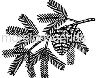 Branch clipart bough Printable download branch PINE Etsy