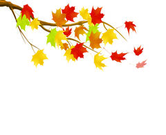 Branch clipart fall leaves With fall Illustrations falling Leaf