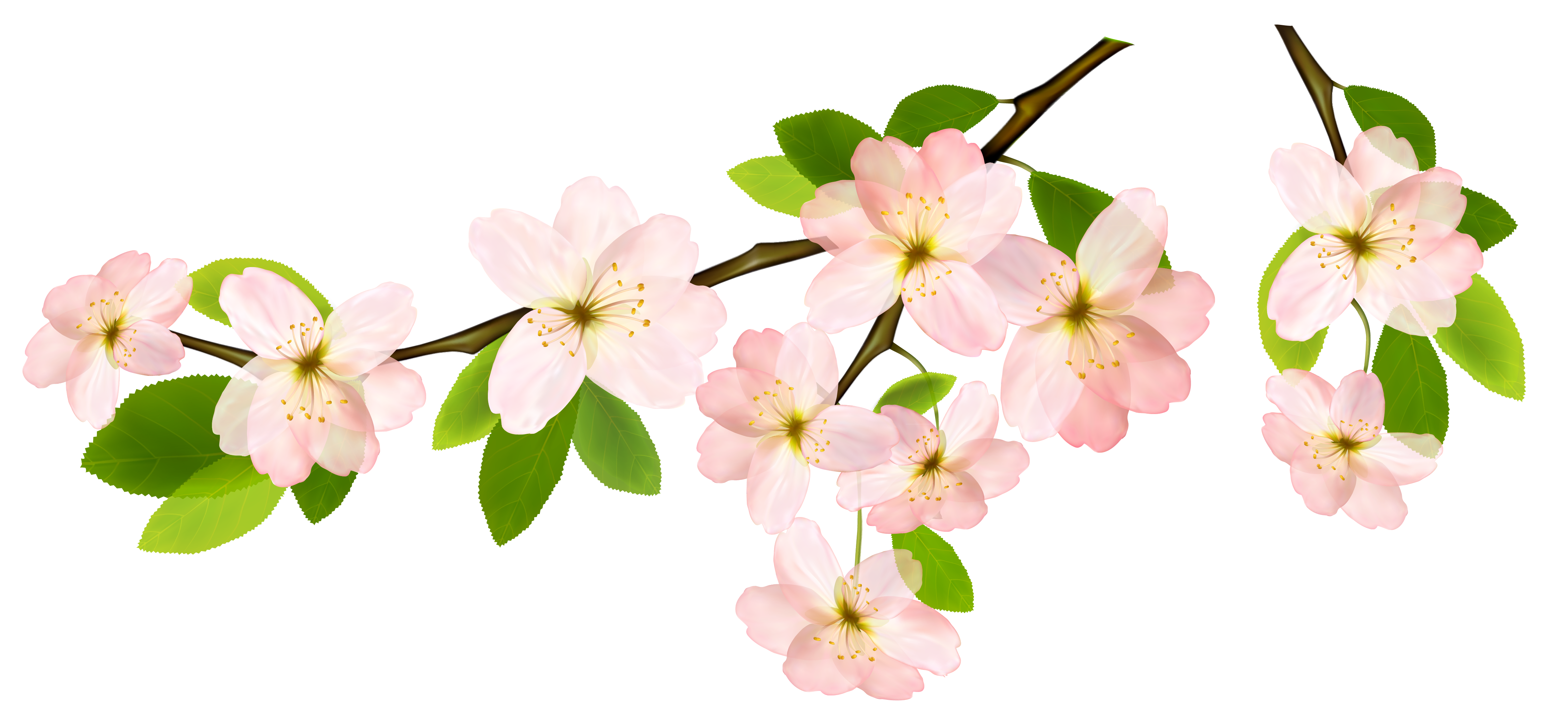 Branch clipart flower branch Yopriceville Clipart PNG  Picture