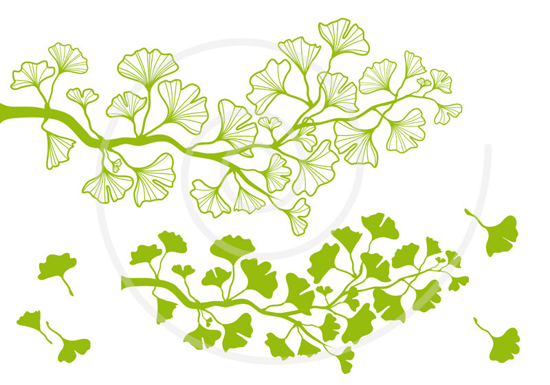 Branch clipart leave illustration Ginkgo leaf leaf green ginkgo