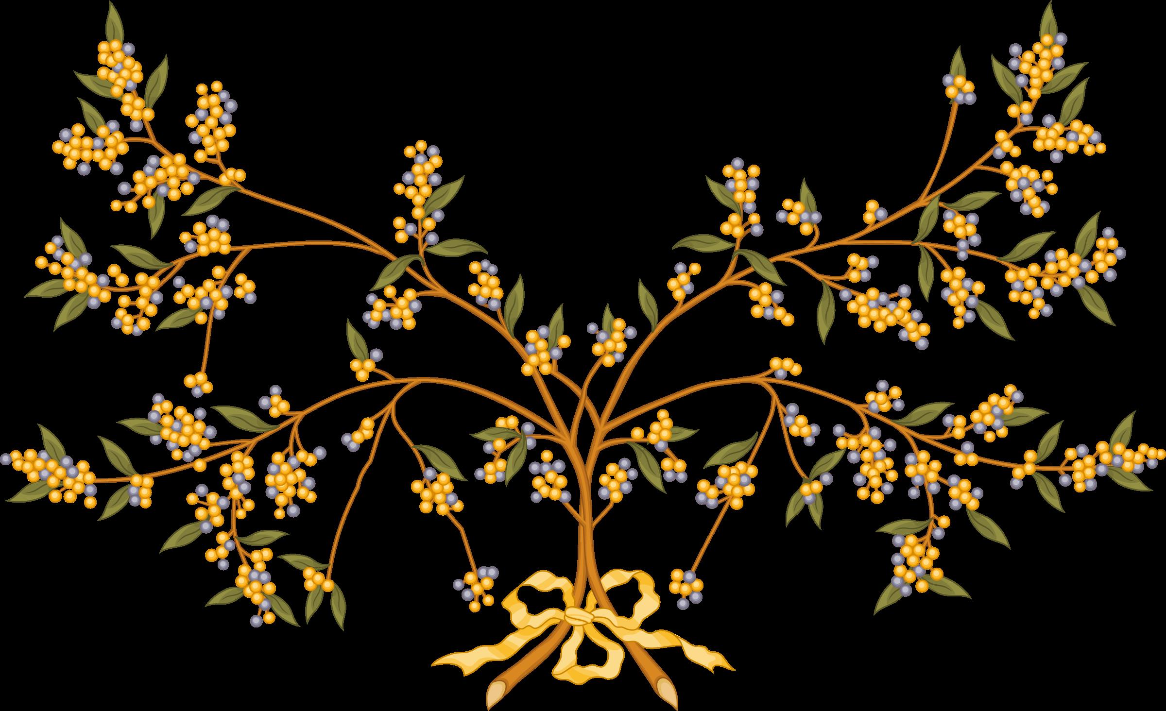 Branch clipart wattle Wattle Wattle branch Clipart branch