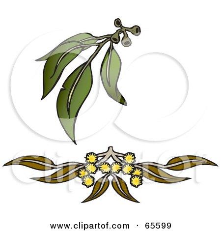 Branch clipart wattle Wattle clipart clipart Download Download