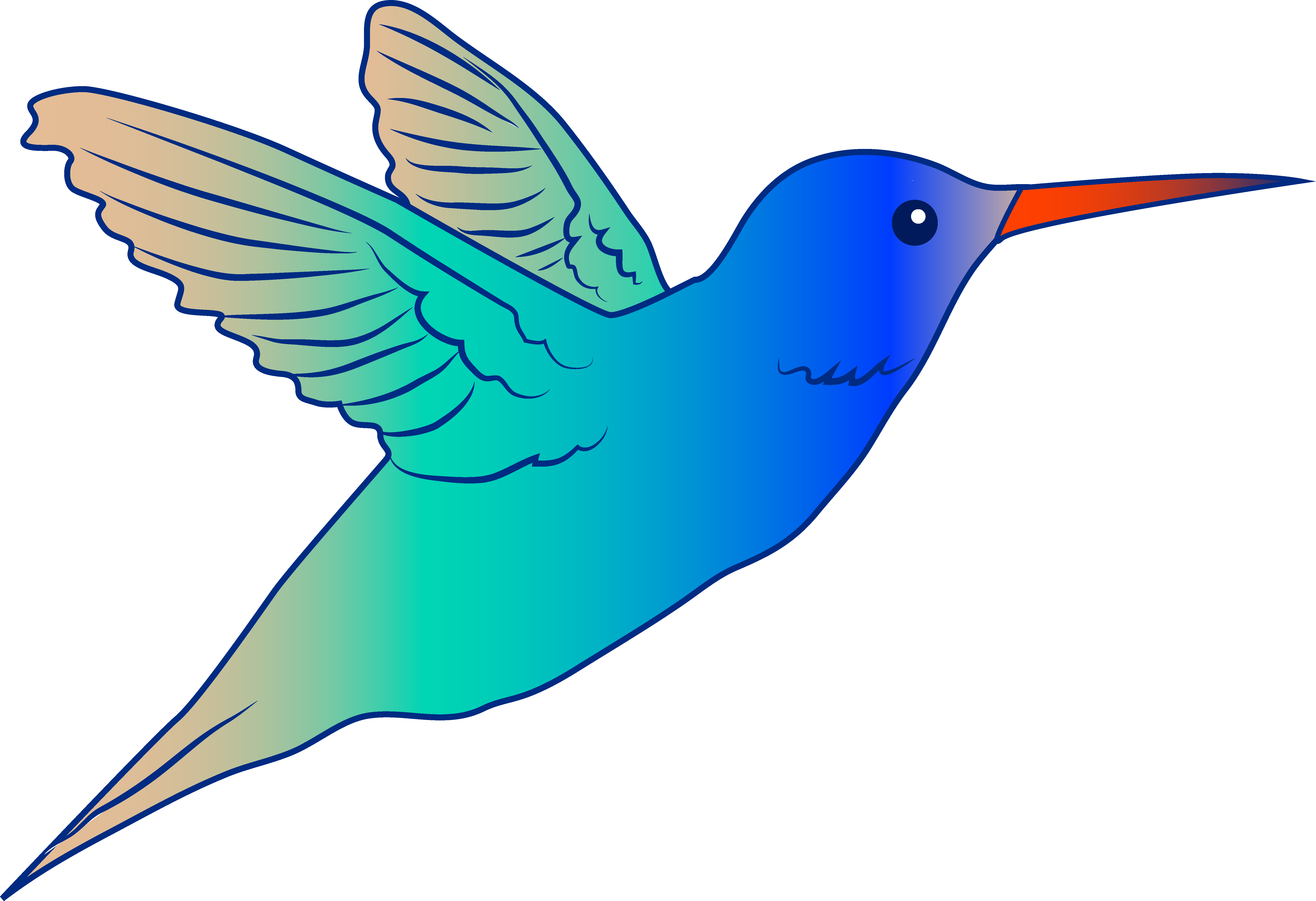 Drawn hummingbird rufous hummingbird Clipart clipart Clipartix image Bird