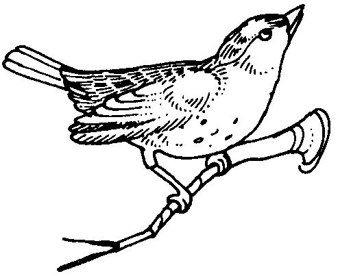Brds clipart burung Bird /animals/birds/_Miscellaneous/more_birds/sm_bird  sm html