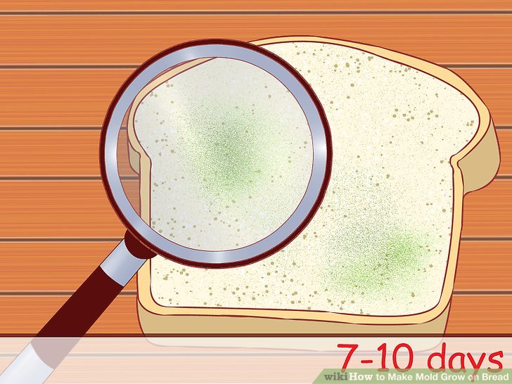 Decay clipart decayed tooth Mold How 10 Bread: Bread