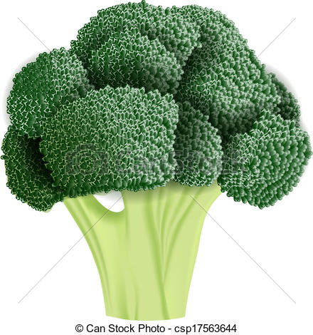 Broccoli clipart vector  illustration Realistic of EPS