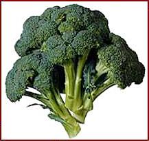 Broccoli clipart vege 1 Broccoli Clipart Broccoli Clip