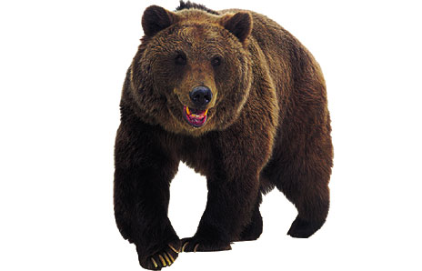 Brown Bear clipart New 2 images #10527 new