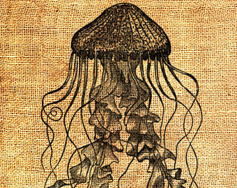 Brown clipart jellyfish INSTANT Jellyfish Transfer Sea clipart