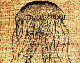 Brown clipart jellyfish INSTANT Jellyfish Transfer Sea clip