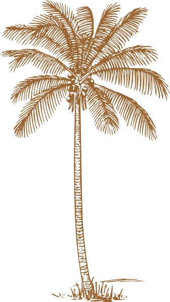 Palm Tree clipart wedding At com For Wedding image