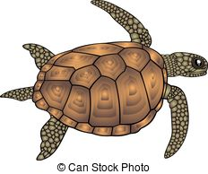 Brown clipart turtle 9  Clip white Illustrations