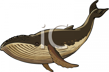 Brown clipart whale Clip Art Clip Brown AnimalClipart