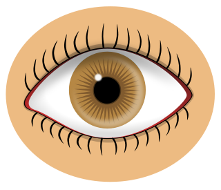 Brown Eyes clipart Clip 3 Domain Eye of