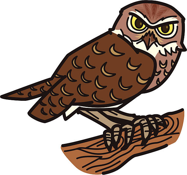 Barred Owl clipart burrowing owl Hawk Hawk Owl #3 Download