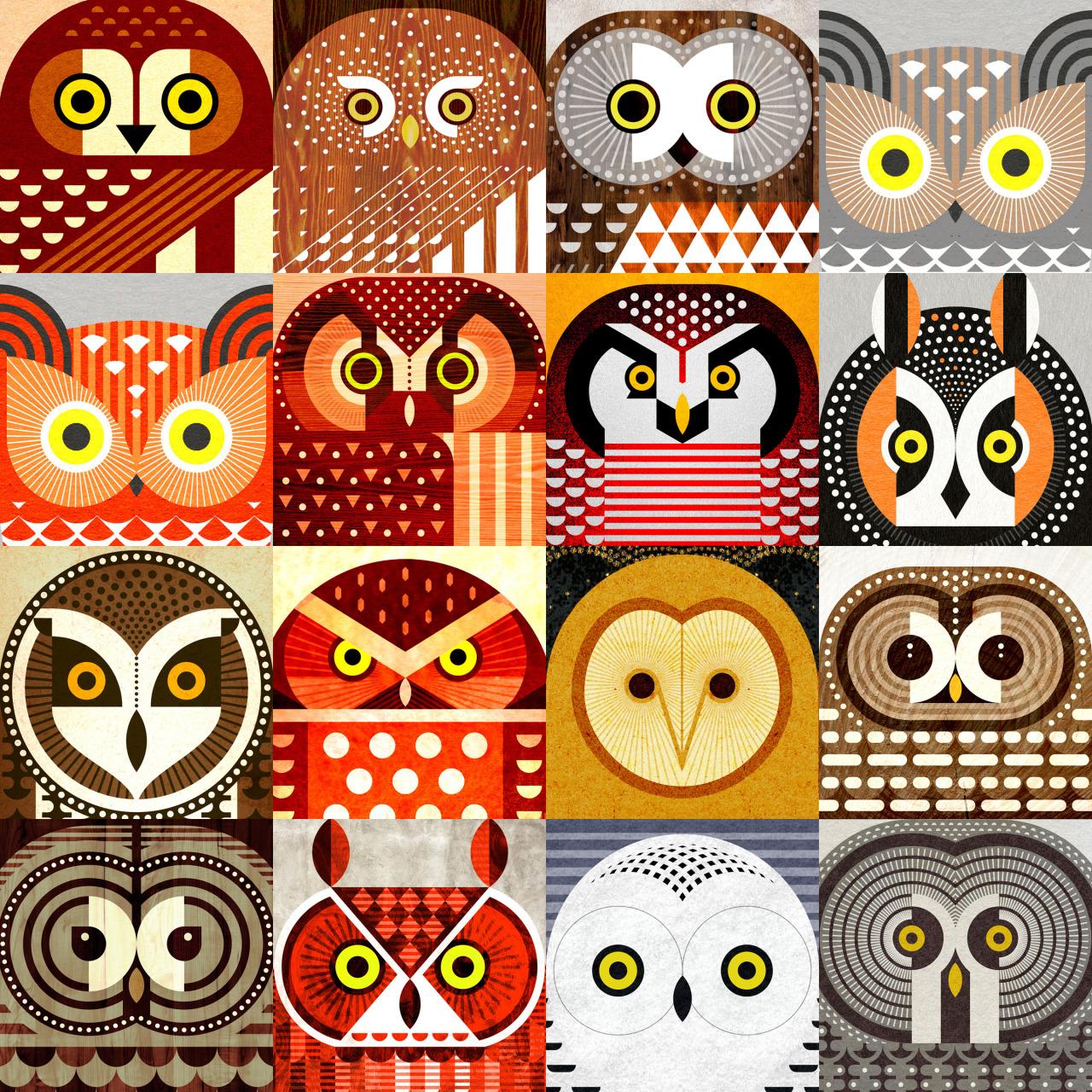 Brown Hawk Owl clipart night owl Species including Sixteen jevajeva: