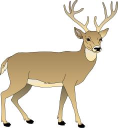 Buck clipart Clip 3 Deer Page Deer
