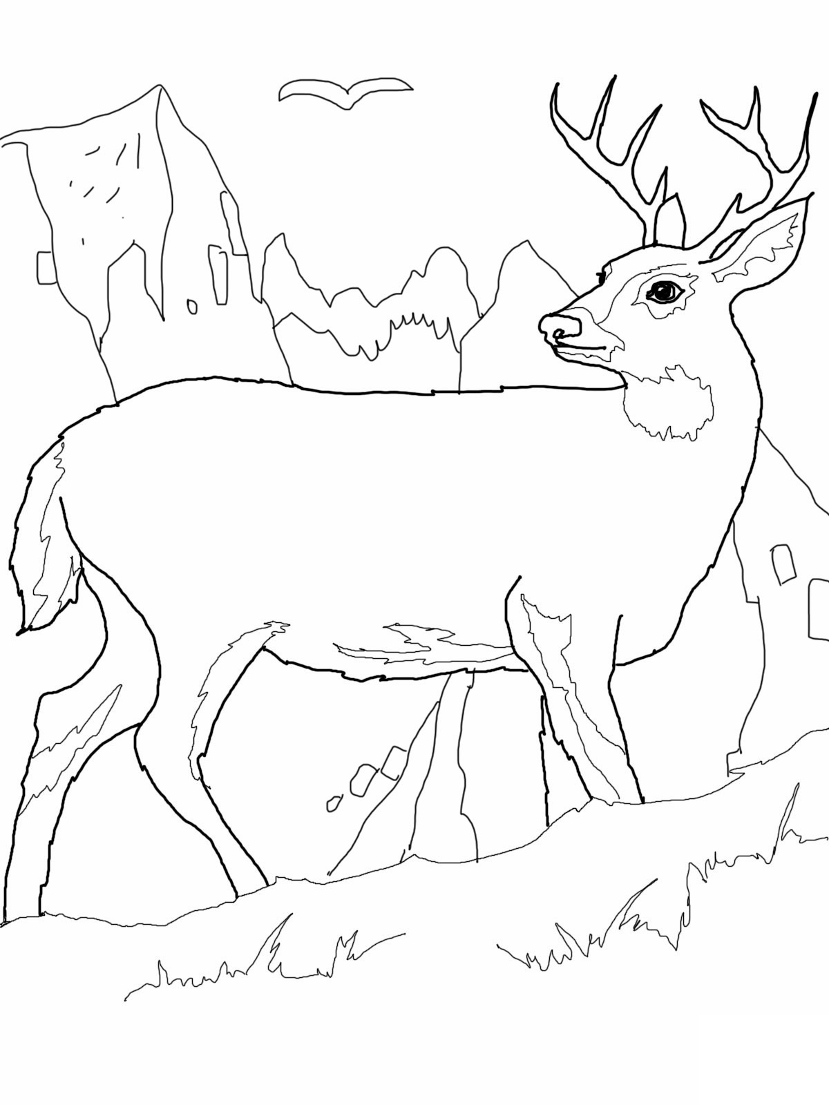 Buck clipart coloring page Deer Pages Coloring Deer Coloring