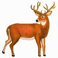 Buck clipart dear Images Clipart Buck Buck Clipart