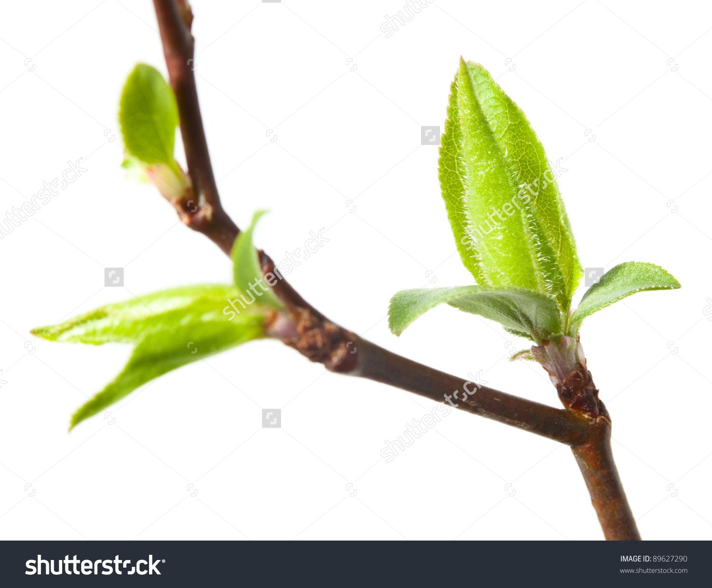 Bud clipart germination Bud flower clipart bud Tree