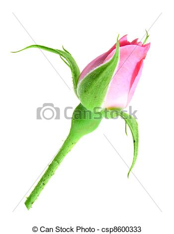 Bud clipart green rose Stock stalk Photo on Single