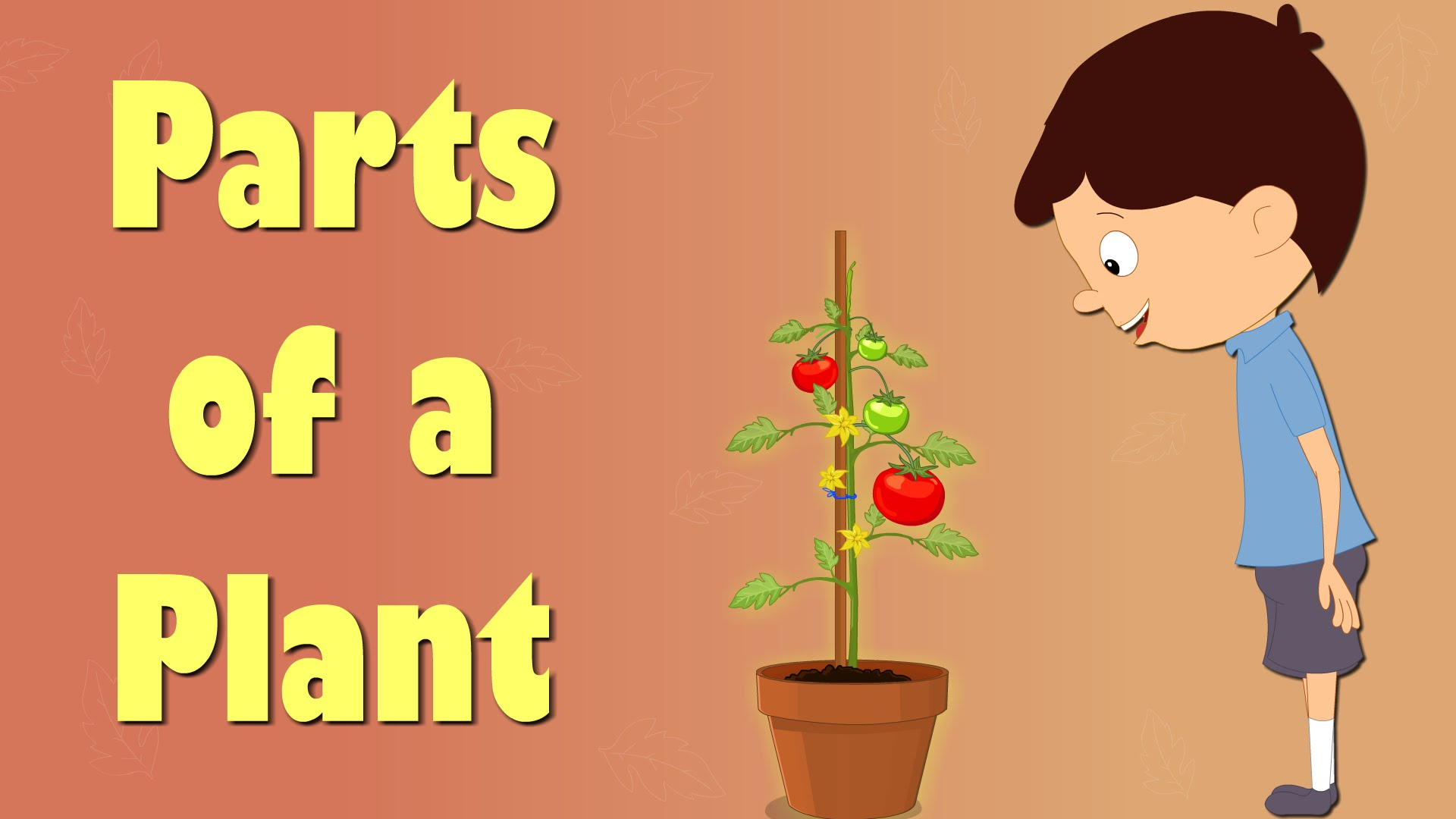 Plant clipart different kind plant Of YouTube a Parts Videos