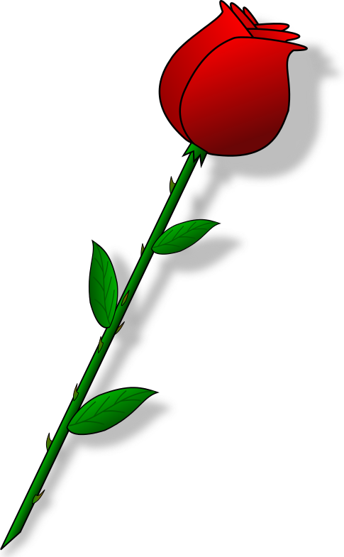Bud clipart rose bud Red  bud rose png
